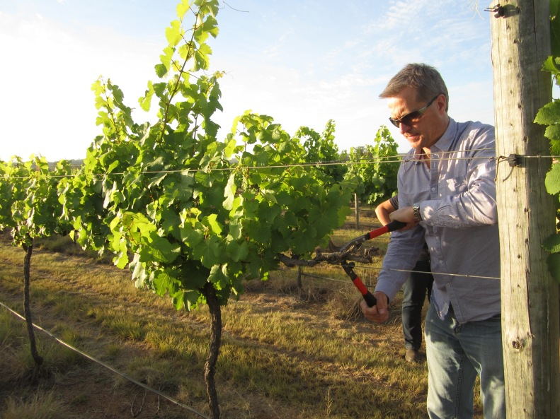 Rare opportunity: Australia's grapegrowers will have their first chance to attend an international workshop on trunk disease at home with a major event set down for November says convenor Dr Mark Sosnowski.