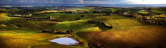 Photo: McLaren Vale Grape, Wine & Tourism Association.