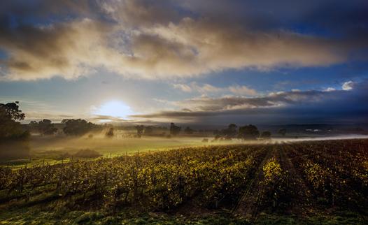 David Bryant — Serafino Wines, McLaren Vale, South Australia.