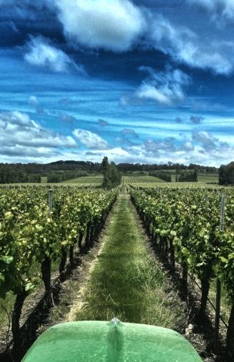 Michael Griffith — Brown Brothers Vineyards, Tasmania.
