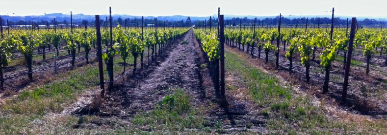 grape-vineyard-wine-field-crop-soil-438675-pxhere.com (2).png